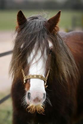 chevaux toute les races